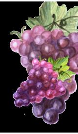 Виноградной косточки масло